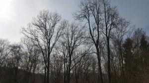 rocklandwoods